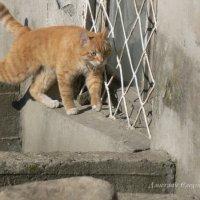 А кот-воевода обходит владенья свои :: Дмитрий Ерохин