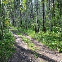 лес :: Алексей Корзников