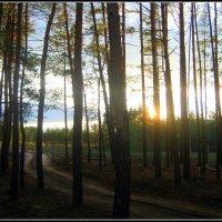 Солнце спряталось в лесу. :: Валентина ツ ღ✿ღ