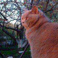 Розовый котэ в лучах заката :: Алла Алина