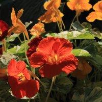 Это всё цветочки :: Михаил Лесин