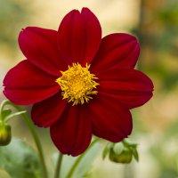 Цветок :: Александр Синчуков