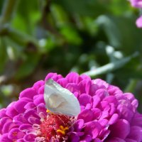Бабочка :: Лариса