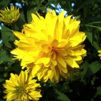 Желтый цветик :: Татьяна Пальчикова