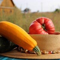 плоды деревенской жизни :: Татьяна Нижаде
