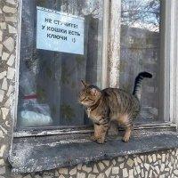 У кошки есть ключи :: Натали Плюс Плюсенкова