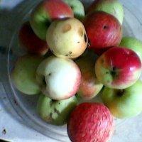 Яблоки на блюде :: Миша Любчик