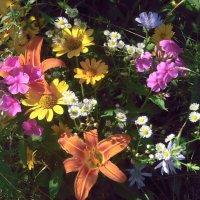 Разноцветье! :: Наталья