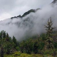 Туман после дождя в Восточных Саянах :: Виктор Никитин