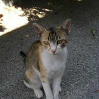 Кошки острова Корфу :: Марина Домосилецкая