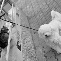 ...кошки всегда выше... )) :: Ольга Нарышкова