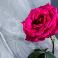 Роза :: Ульяна Сафронова