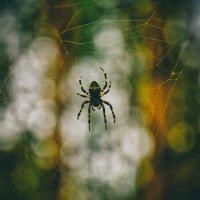 Spider The Killer :: Андрей Дыдыкин