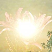 Огненный цветок :: Арина Федорова