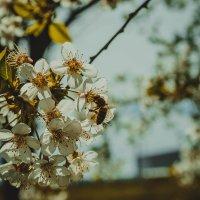 пчела :: Валерия Стегно