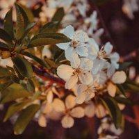 эх весна :: Валерия Стегно