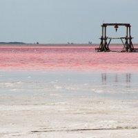 Розовое озеро :: Viktoriya Balaganskaya