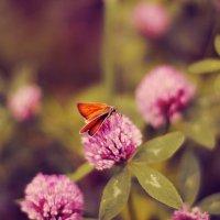 butterfly :: Екатерина Ландерс