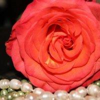 Даже красота жемчуга блекнет перед такой красотой... :: Ирина Кураж