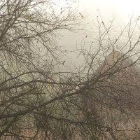 Утро, туман и я в кустах. :: Владимир Гилясев