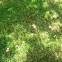 Яблоки от яблони... :: Тамара (st.tamara)