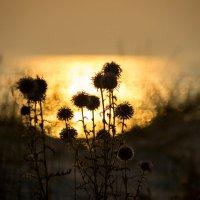 Песчаная растительность :: Veronika Mischenko