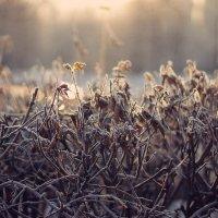 white frost :: Екатерина Ландерс