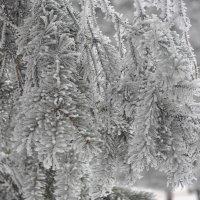 Зима 2о13 :: Valeriya Voice