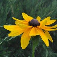 цветок :: Никита Сапронов