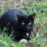 кошка в ожидании :: Александр Быков