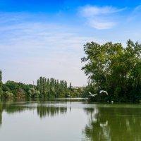 У озера :: Геннадий Оробей