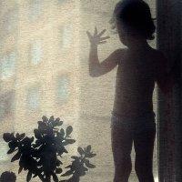 Комнатные растения и не только :) :: Anna Lipatova