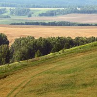 август в полях :: зоя полянская