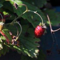 А это всё - ягодки. :: Михаил Лесин
