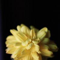 цветок :: Сергей Мосякин