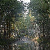 Лесные зарисовки :: Василий Либко