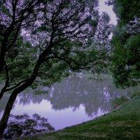 Утро..Туман над озером :: Viacheslav Birukov