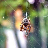 """""""Паутину цепко вяжет сединой своей паук..."""" :: Надежда"""
