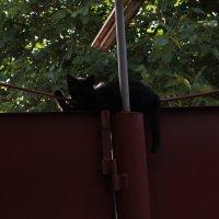 как спят кошки :: Михаил Светличный