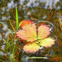 скоро осень :: Надежда
