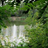 Летний пруд в обрамлениии... :: Тамара (st.tamara)