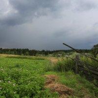 Перед дождём :: Татьяна Афанасьева