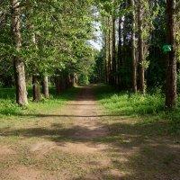 В волшебном лесу :: Элен .