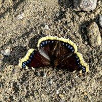 Бабочка :: Алена Сизова
