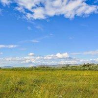 Небо над полем :: юрий Амосов