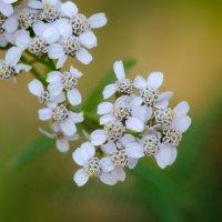 Цветы :: Pavel Markov