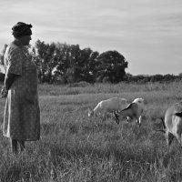 Деревенская жизнь... :: Catherine Bugrovskaya