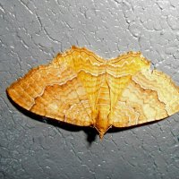 Ночная бабочка! :: Наталья