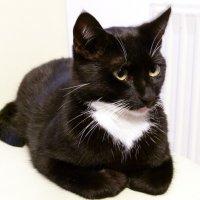 Черная кошка :: DiBuxxx .