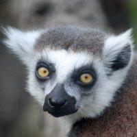 Зоопарк. :: bybyakovo